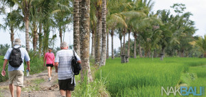 ubud rice field trekking